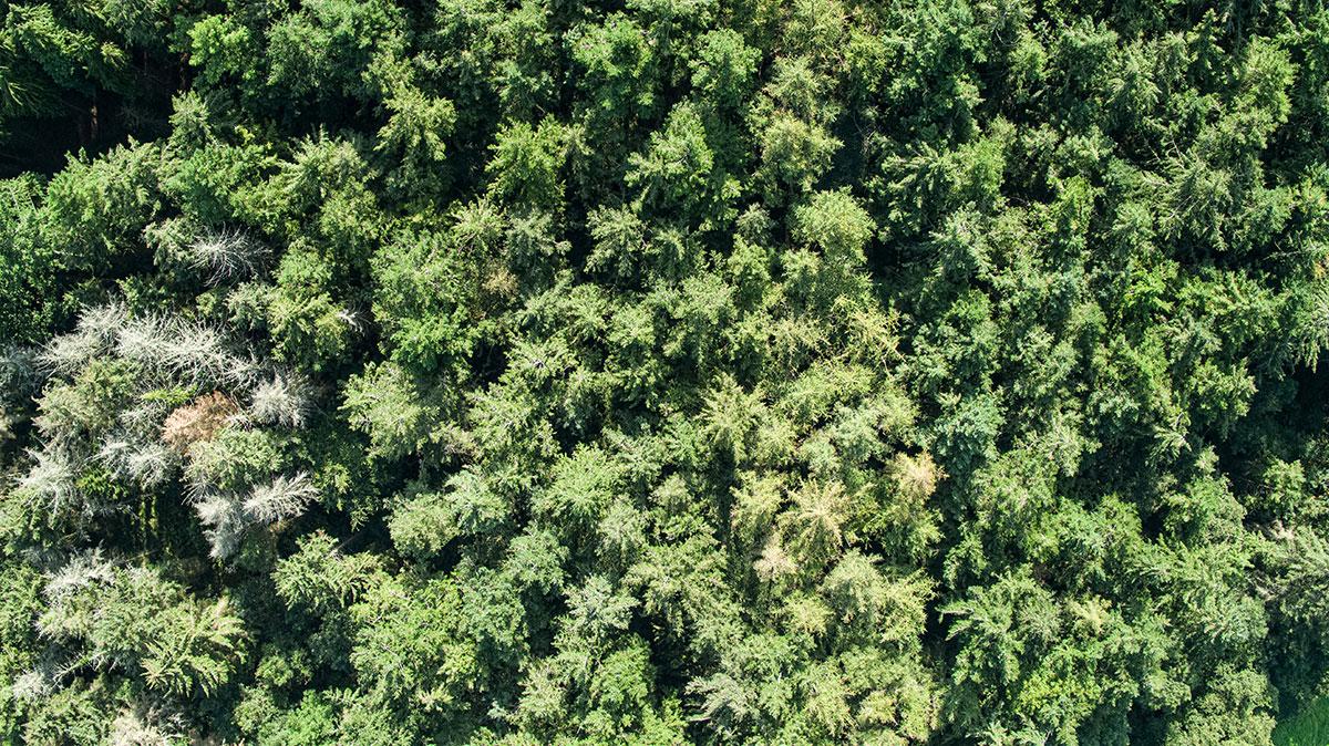 Drone Survey